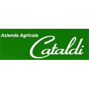 Cataldi