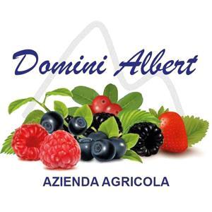Domini Albert