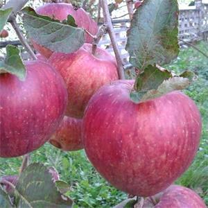 Il Frutteto Di Bersej