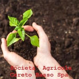 Società Agricola Cereto Basso