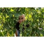 Arianna Occhipinti Azienda Agricola