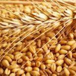 10 motivi per consumare grani antichi