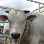 Pronti 31 milioni di euro a sostegno della zootecnia